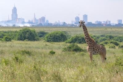 Kenya 2019 Low-070119-1190
